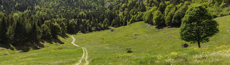 schmiedl-green-alm
