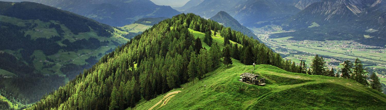 schmiedl-green-berg